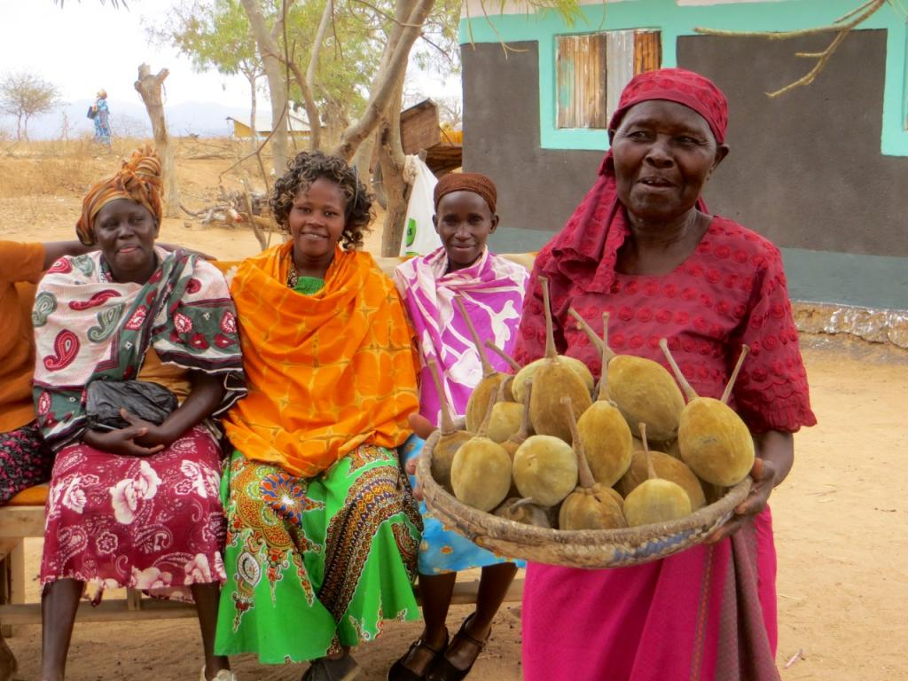 Harvesting baobab fruit for sale to Kaibae offers indigenous farming communities an alternate source of revenue.